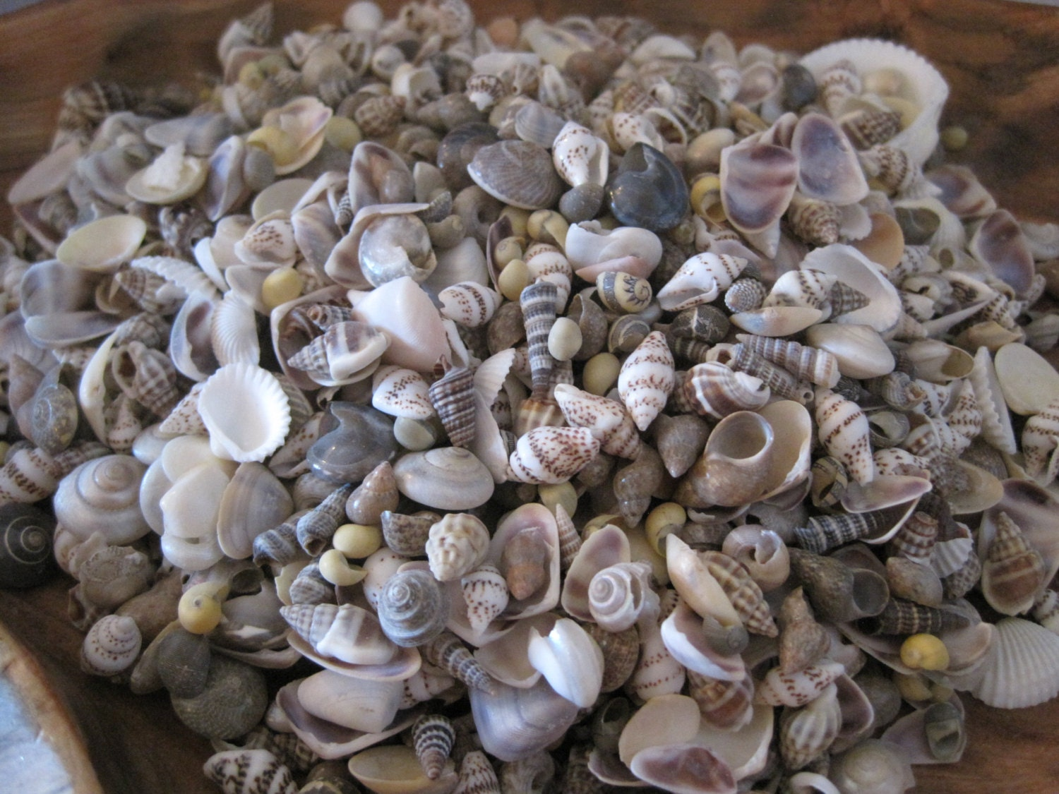 Tiny mixed shells 1 cup 250 craft shells beach wedding for Tiny shells for crafts