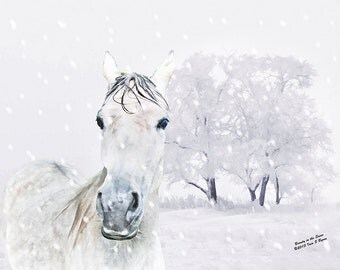 horse art, horse art print, horse photography, horse decor, horse print, equine art, equine photography, equine print, equine decor, Arabian