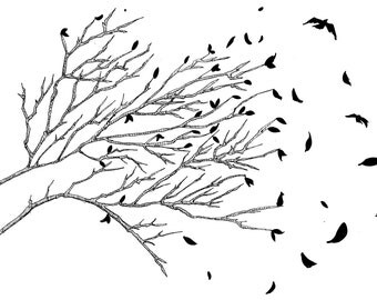 Bird Leaves Black and White Fine Art Print