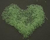 Rare Uranium Glass 2-Cut Translucent Light Green Seed Beads 10g Vintage Czech Edwardian Downton Abbey Gatsby Art Deco