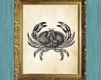 Crab Illustration Art Print Crab Art 8 x 10 Sea Life Art Print Seaside Art Print Sealife Art Print Natural History Print