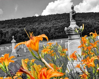 Graveyard Lillies, HDR photograph, black, white, and orange, 8 x 10 fine photography print, Life and Death