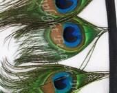 1 yard, Peacock Feather, eye trim on bias tape, bulk, wholesale, per yard