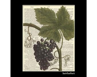 Grapes - 1700s Illustration - Dictionary Art Print - Home Decor Print No. P196