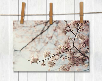 One Fine Day  - Photographic Print - Pink, Cherry Blossom, Spring, Nursery, Baby, Wall, Shabby, Cottage, Chic, Decor, Home, Sky, Blue