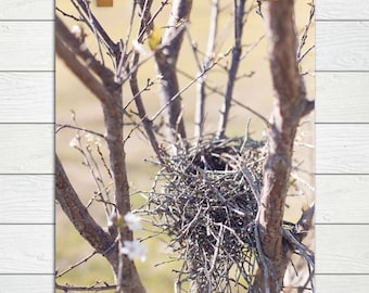 Bird Nest Photography, nature photography, bird print, pear tree, spring photography, birds nest, nursery decor, large art, baby, country