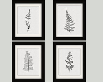 Fern wall art etsy for Cheap black and white prints