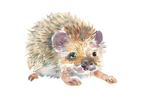 Childrens Art - Animal Painting - Size 8x10inches  - Watercolor Painting - Nursery Art Print-Hedgehog