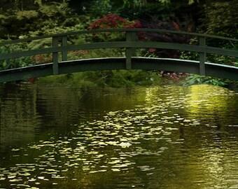"Paris photography - water lily Monet garden giverny france 11x14 8x10 16x20 green gold paris wall decor travel wall prints ""Secret Splendor"""