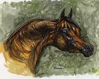 Arabian horse, equine art, equestrian, horse portrait,  original ink and watercolor painting