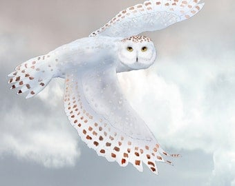 Snowy Owl 9 signed fine art print 8x10 Bird Lover Gift Holiday Gift Nature Housewarming