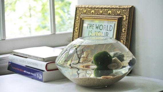 LAST ONE LEFT , Discontunied  After Sold - Under Lake View Aqua Terrarium  - Marimo Ball ,Moss Ball, Aquarium , Sea Fan, Betta Fish