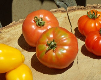 Red Brandywine Tomato Seeds, organic seed, heirloom tomato seeds tomato plants vegetable seeds organic garden harvest party seeds