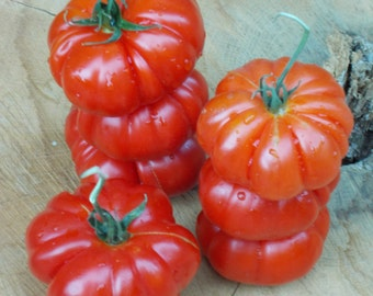 Costoluto Genovese Tomato Seeds, Heirloom Tomatoes, organic tomato seeds, vegetable seeds