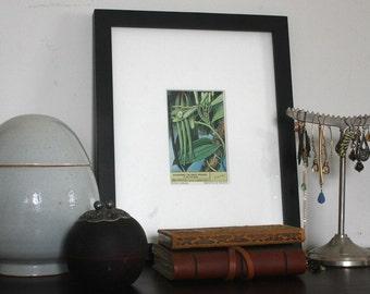 Vintage miniature print,1953 Plants series