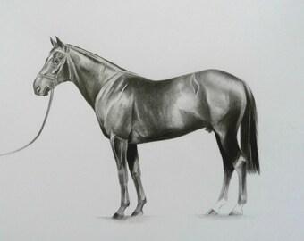 Original Racehorse Drawing Of Dansili at Banstead Manor Stud