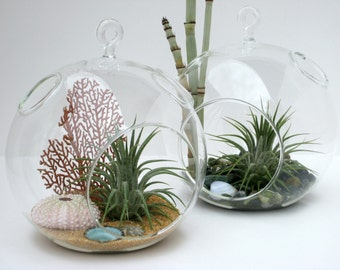 Terrarium Set: Choose Two Classic Hanging Globe Terrariums from William's Grove and Save