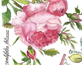Rose jam, Archival watercolor print, Cooking illustration,Kitchen recipe, Food art