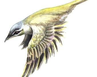 Art print of drawn yellow bird. Print of a hand drawn bird, 11 x 8.5 inches. Print of drawing for home or office decor.