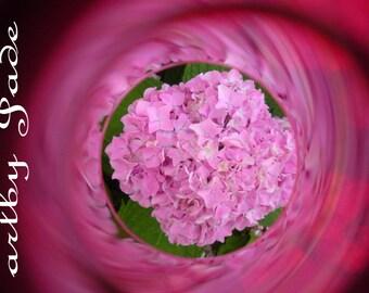 "8""x10"" Modern Hydrangea Photograph titled, ""50 Shades of Pink"""