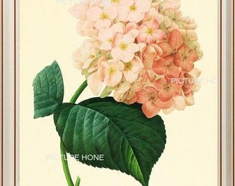 Hydrangea Botanical Print 58 Beautiful 8X10 Antique Redoute Art Room Decoration Wall Art to Frame Pink Garden Nature Summer Spring