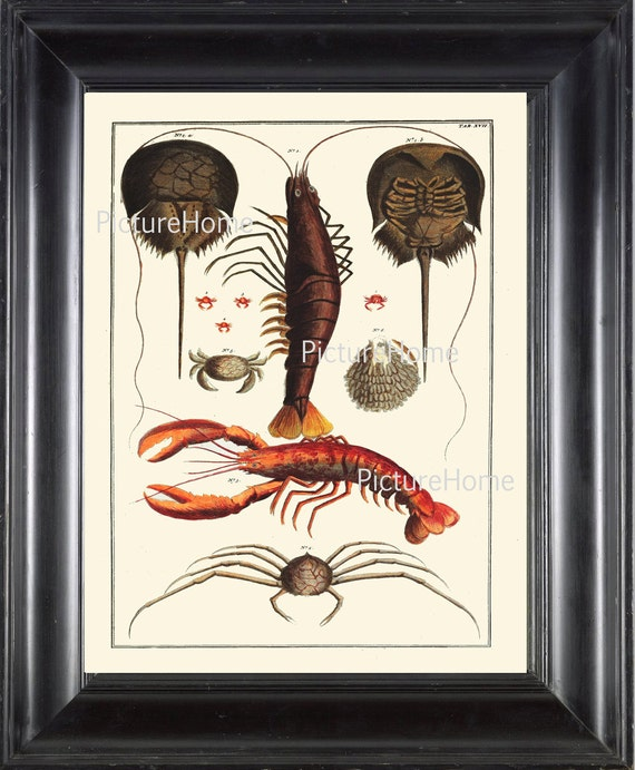 Shrimp Print 6 Beautiful 8x10 Antique Based On 1735