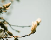 Spring Flower Buds Photo Print, Wall Art, Nature Photography, Flower Photography, Peach Blue Brown, Tree Photography, Home Decor