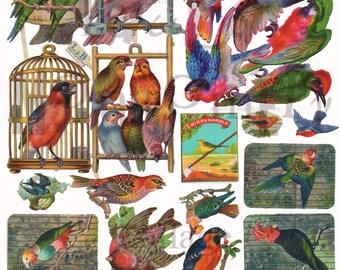 Birds Number 2 Digital Download Collage Sheet