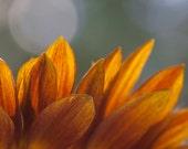 Petals, orange, brilliant, delightful, colorful, beautiful, spring