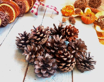 Twenty Natural Pine Cones - Craft Supplies