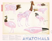Animal Anatomy Physiology, Collage, Illustration, Poster, Print - Skeleton Giraffe, Whale, Cow, Bat, Seal, Secretary Bird, Cassowary Bird