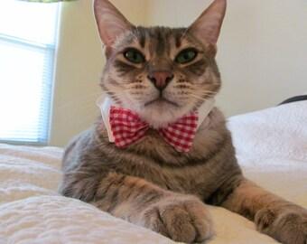 Classy cat white shirt collar & red/ white gingham bowtie