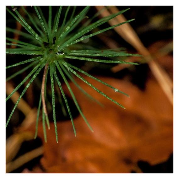 Autumn Photography, Green and brown, Fall Wall Art, Minimalist photo, 5x5 Photo