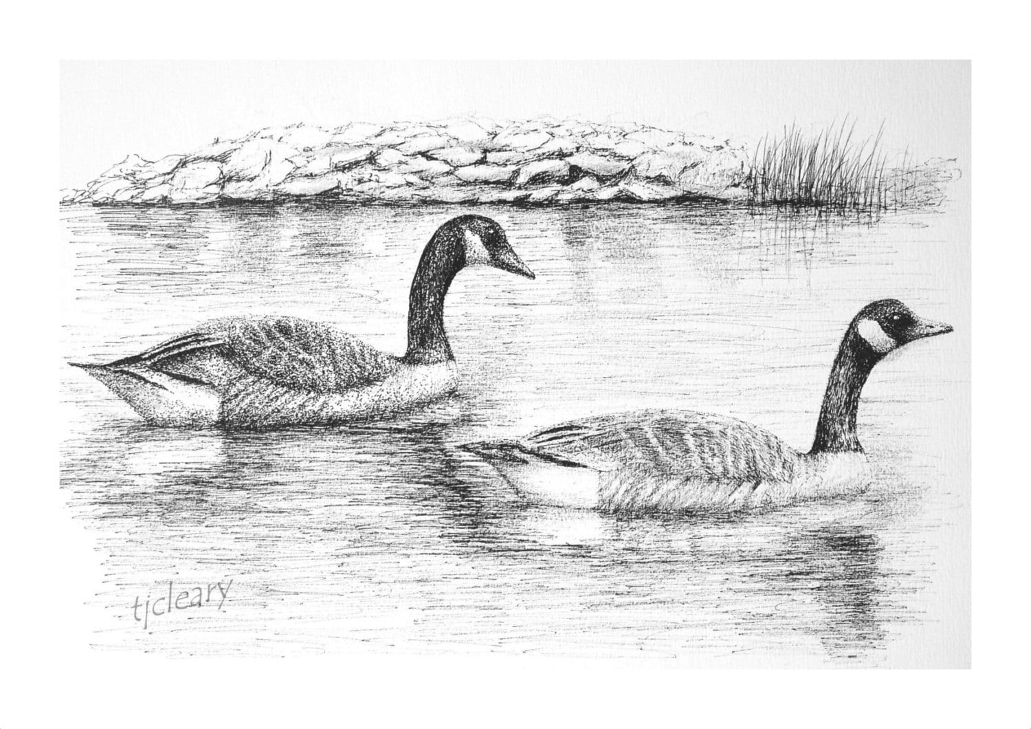 Gaggle of Geese Drawing Canada Geese Graphite Pencil