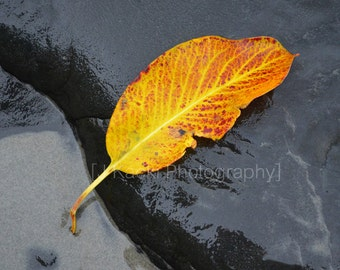 Leaf on Rock and Sand, Vancouver Island, Rocky Shore, Yellow Leaf