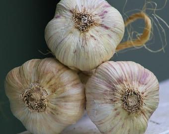 Homestead--heirloom garlic--3 midsize bulbs.