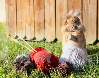 Rabbit Standing On Yarn PRINT 8x10