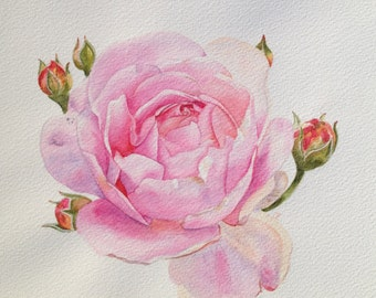 Framed watercolor/aquarel painting of pink rose