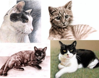 YOUR CAT portrait drawing