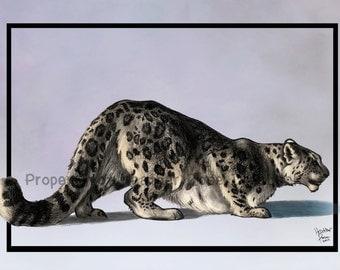 Snow Leopard Study Original Art Print