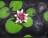 "M. Squillacioti Original Oil Painting.   ""Water Lily""  (24"" X 18"")"