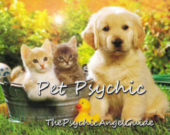Pet Psychic Tarot & Psychic Reading In LIVE VIDEO and JPG