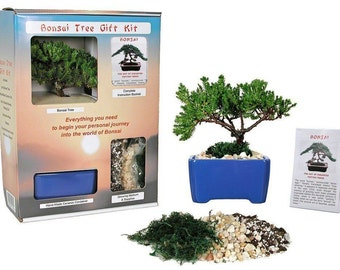 Live Japanese Juniper Tree - Bonsai Tree Gift Kit