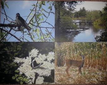 Set of 8 blank notecards with nature photographs