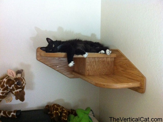 corner cat stair from the vertical cat. Black Bedroom Furniture Sets. Home Design Ideas