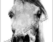Proud Arab Horse Print of Pen and Ink drawing, Signed and Numbered