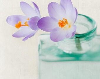 Spring Flower Art, Nature Photography, Purple Crocus, Still Life Photography, Aqua, Teal, Flower Wall Art, Nature Print, Flower Art Print