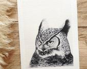 Owl by Daniel