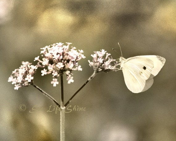 Butterfly Photo, Nature photography, butterfly art, vintage decor, flower photography, gold decor, bathroom wall art