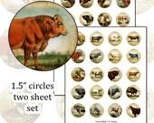 "Antique Cows 1.5"" circle digital collage sheet farm animal herd 36mm round"